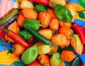 Chili Habanero Serrano hot mexican peppers — Stock Photo