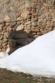 Armchair on snowed stone masonry wall — Stock Photo