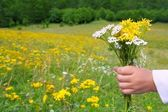 Children hand hold flowers in spring meadow — Stock Photo