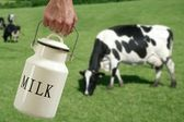 Milk pot farmer hand cow in meadow — Stock Photo