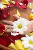 Aromaterapi, çiçekler el Banyosu, gül yaprağı — Stok fotoğraf