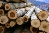 Stacked wooden logs, tree trunks — Stock Photo