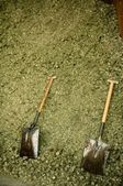 Two shovel in dry alfalfa, horses food, granary, barn. — Stock Photo