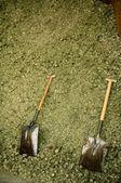Two shovel in dry alfalfa, horses food, granary, barn. — Stock Photo