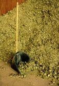 Dry alfalfa, horses food, granary, barn. — Stock Photo