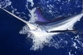 Atlantic white marlin big game sport fishing — Stock Photo