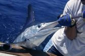Billfish white Marlin catch and release on boat — Stock Photo