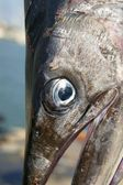 Mediterranean spearfish billfish head tetrapturus belone — Stock Photo