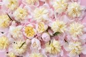 Kolorowe kwiaty różowe i żółte tło — Zdjęcie stockowe