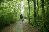 Adventure hiking on beech forest of Pyrenees — Stock Photo