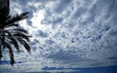 Cloudy sky backlight with palm tree — Stock Photo