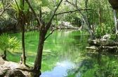 Cenote Riviera Maya jungle mayan Quintana Roo — Stock Photo