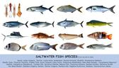 Fish species saltwater clasification isolated on white — Stock Photo