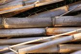 Cane background texture dried river canes — Stock Photo