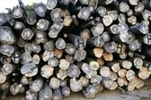 Background with stacked wood trunks — Stock Photo