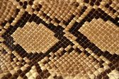 Background snake skin pattern brown — Stock Photo