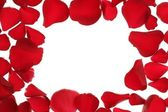 Red rose petals frame border, white copy space — Stock Photo