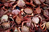 Crab from Mediterranean, texture pattern — Stock Photo