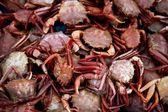 Crab from Mediterranean, texture pattern — Stock Photo