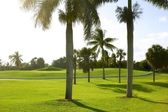 Miami Key Biscayne Golf tropical field — Stock Photo