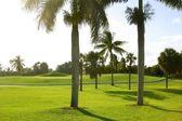 Miami Key Biscayne Golf tropical field — Stock Photo