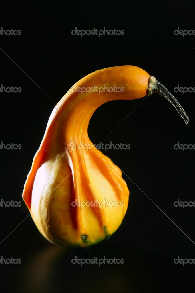 Orange yellow little halloween pumpkin isolated on black background  Stock Photo #5500891