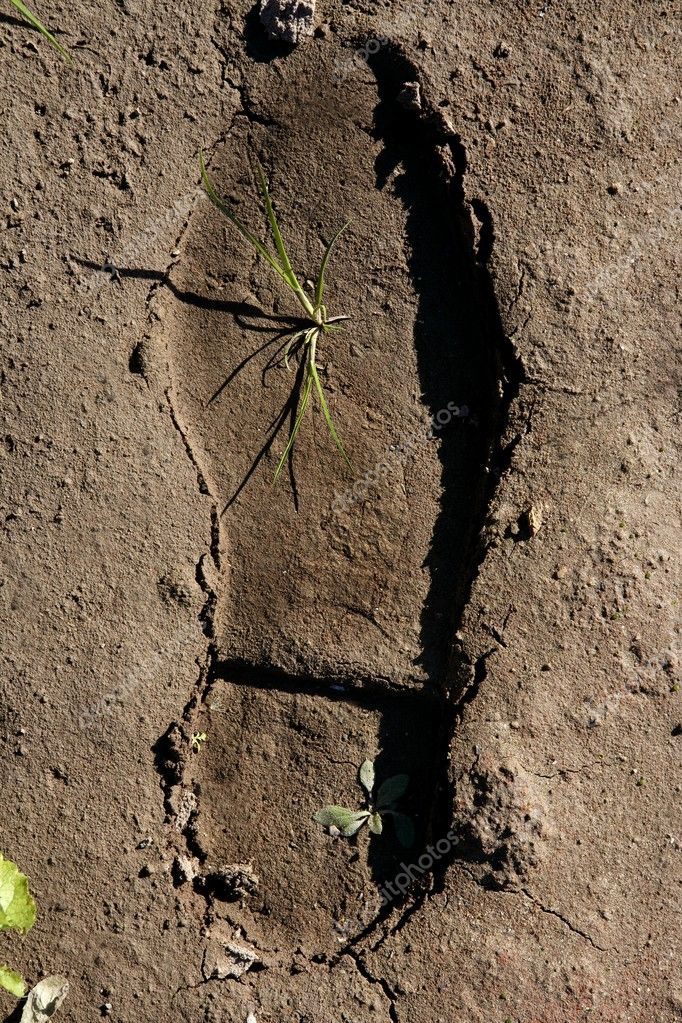 Human footprint in a clay floor, plant growing inside, new born. — Stock Photo #5504069