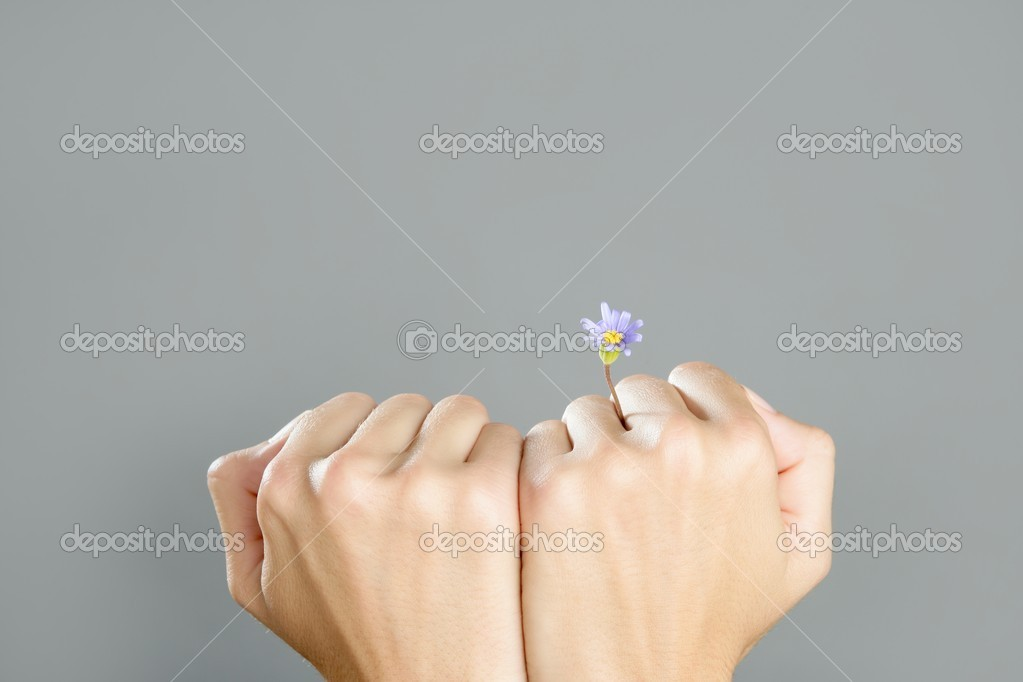 Concept of life with plant growing from woman hands  Stock Photo #5504371