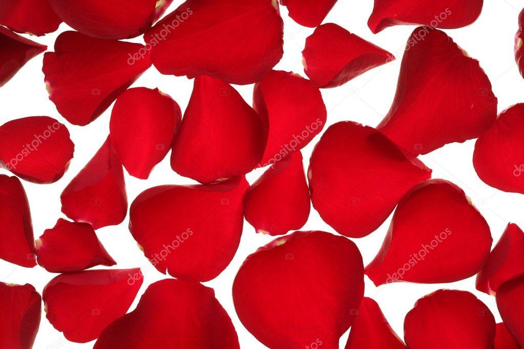 红色的玫瑰花瓣纹理背景