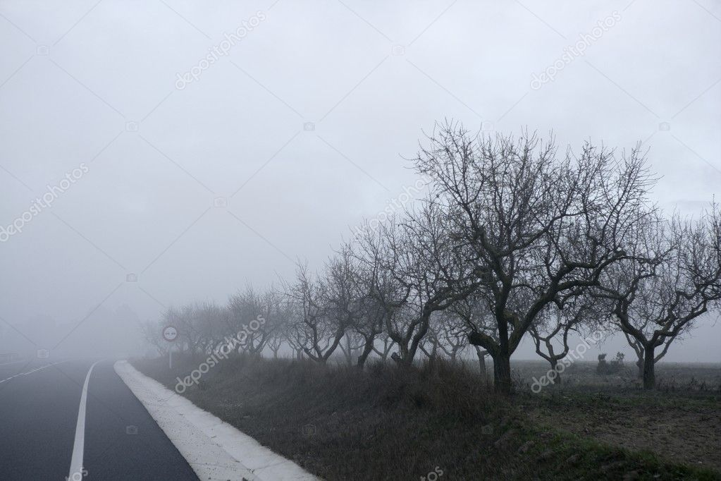 Threes fading into the fog in a cold winter gray foggy morning — Stock Photo #5505706