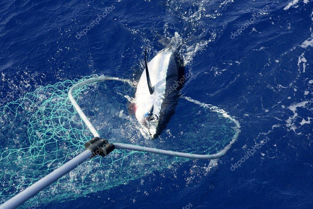 промышленная рыбалка в океане видео