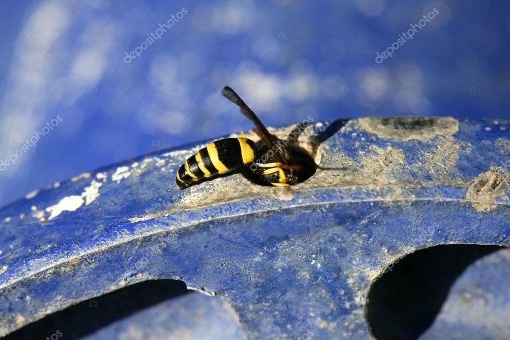 Blue Jacket Bug - Pl Jackets