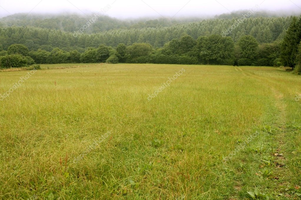 Cloudy day in the forest meadow green Pyrenees landscape — Stock Photo #5507151