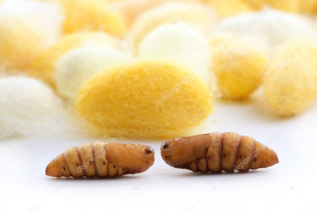 Silk Cocoon Images Cocoon Silkworm Many Silk Worm