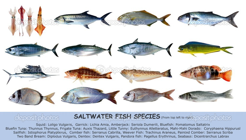 Fish species for White fish types