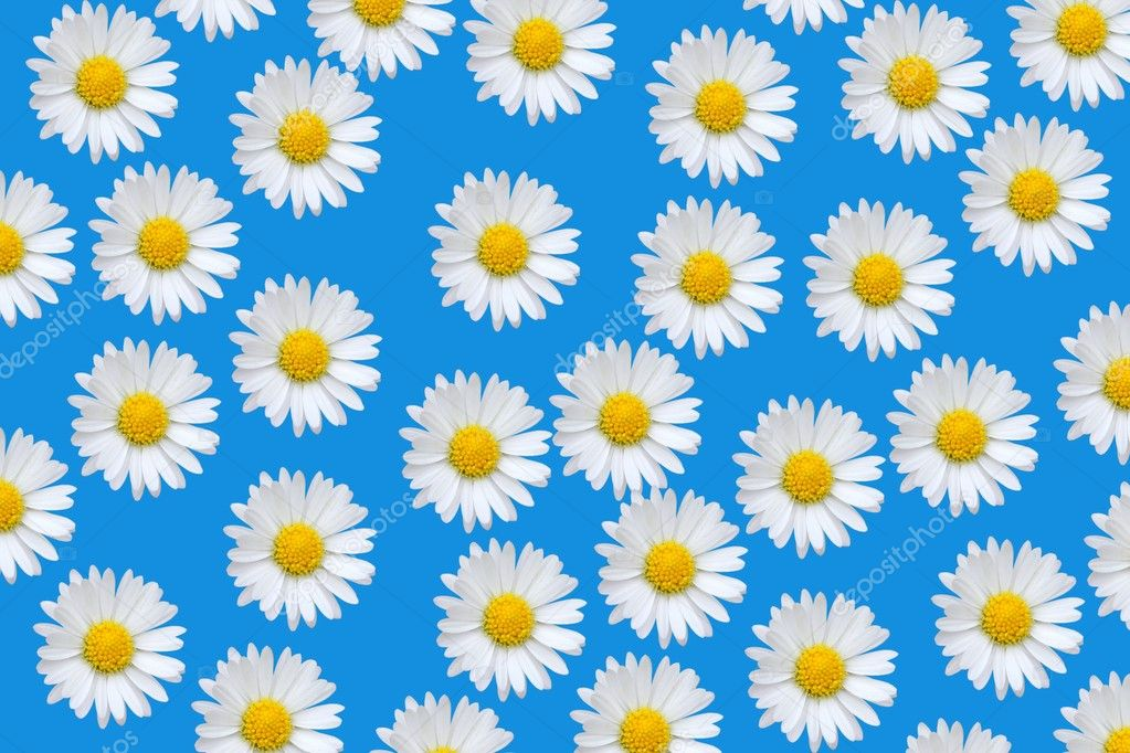 Daisy pattern wallpaper - photo#17