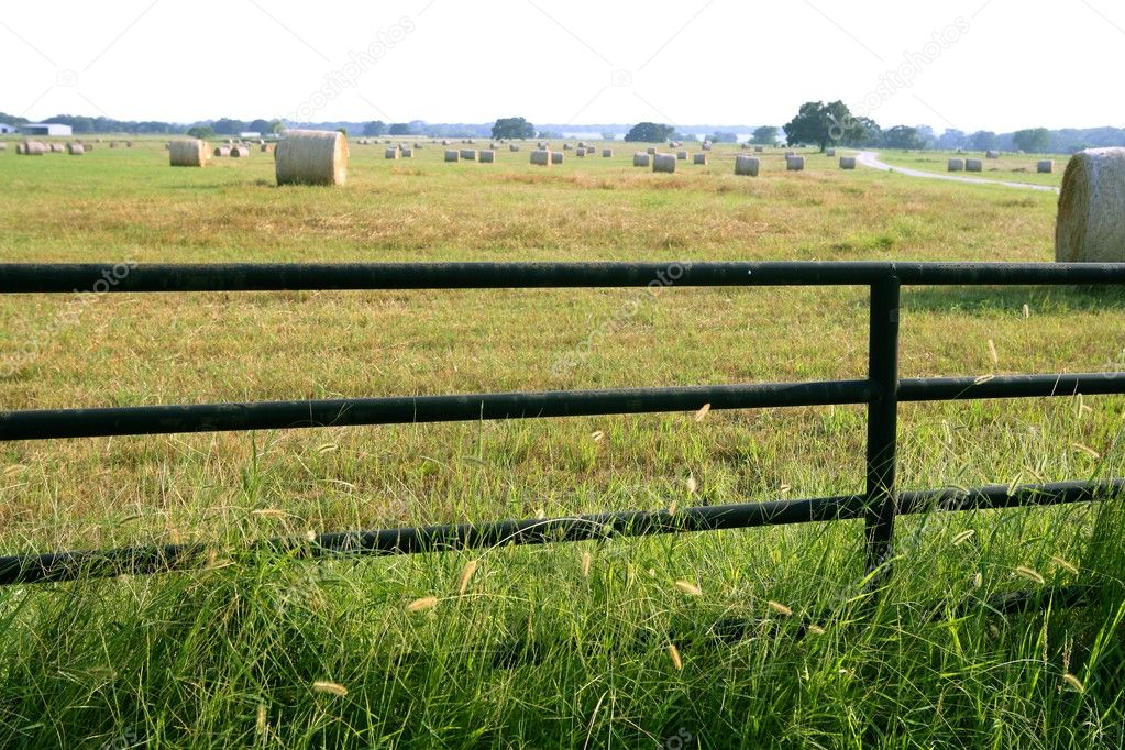 Meadow grasslands farm round cereal bales in Texas  Stock Photo #5509223