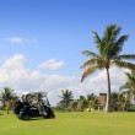 メキシコでのゴルフコースの熱帯ヤシの木 — ストック写真