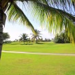 Stock Photo: Golf course tropical palm trees in Mexico