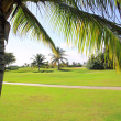 Golf course tropical palm trees in Mexico — 图库照片