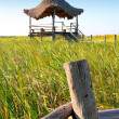 Hut palapa in mangrove reed wetlands - Stock Photo