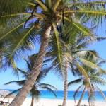 Caribbean coconut palm trees tuquoise sea — Stock Photo #5511319