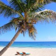 Caribbean coconut palm trees in tuquoise sea — Stock Photo