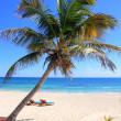 Caribbean coconut palm trees in tuquoise sea — Stock Photo #5511332