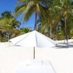 Parasol beach tropical umbrella mattress palm trees — Stock Photo