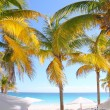 Coconut palm trees Caribbean tropical beach - Stock Photo