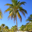 Coconut palm trees white sand tropical paradise - Stock Photo