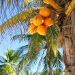 Coconut palm trees Caribbean tropical beach — Stock Photo #5511376