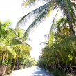 Coconut palm trees track road tropical - Stock Photo