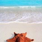 Caribbean starfish tropical sand turquoise beach — Stock Photo